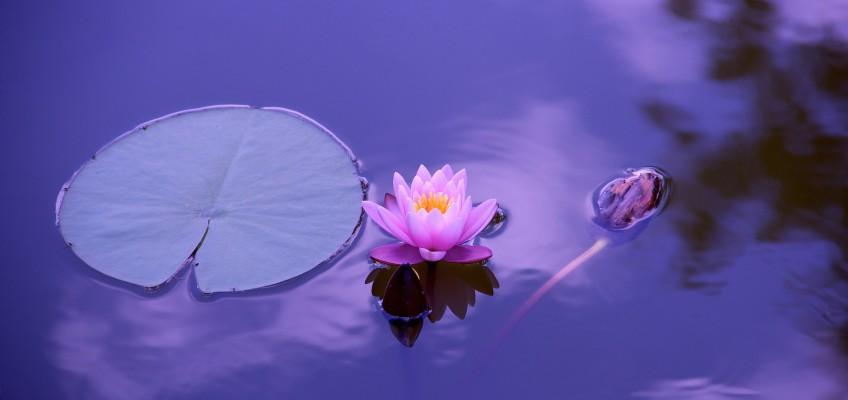 Conclusione Corso di Mindfulness a Scandiano