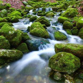 VITA DI SORGENTE – conclusione dell'11° percorso di Mindfulness per la Riduzione dello Stress